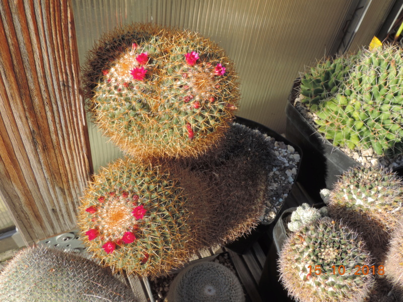 Cacti and Sukkulent in Köln, every day new flowers in the greenhouse Part 201 Bild1381