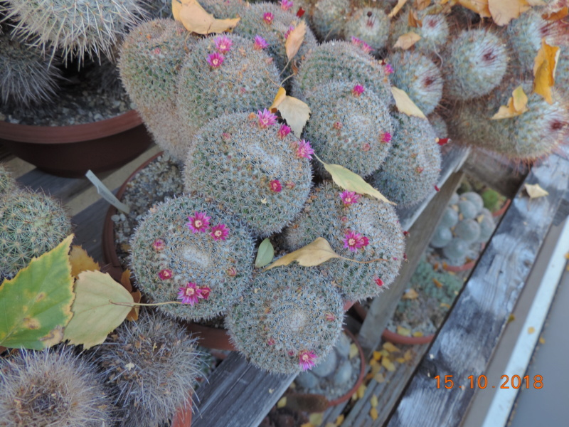 Cacti and Sukkulent in Köln, every day new flowers in the greenhouse Part 201 Bild1382