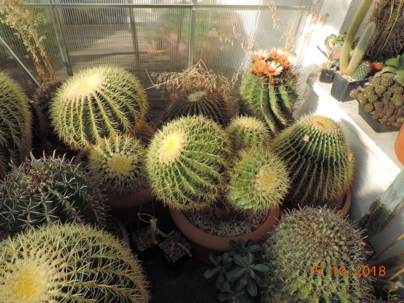 Cacti and Sukkulent in Köln, every day new flowers in the greenhouse Part 201 Bild1383