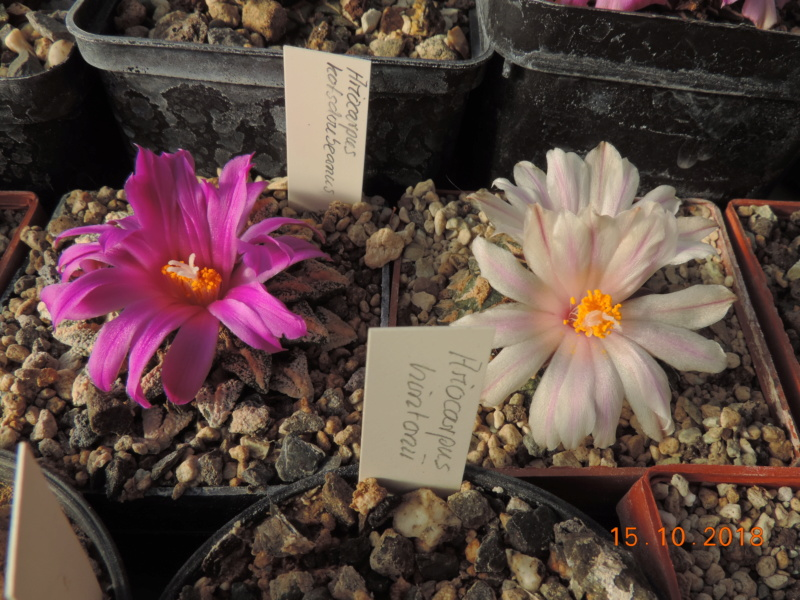 Cacti and Sukkulent in Köln, every day new flowers in the greenhouse Part 201 Bild1400