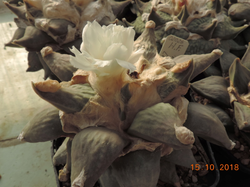 Cacti and Sukkulent in Köln, every day new flowers in the greenhouse Part 201 Bild1414