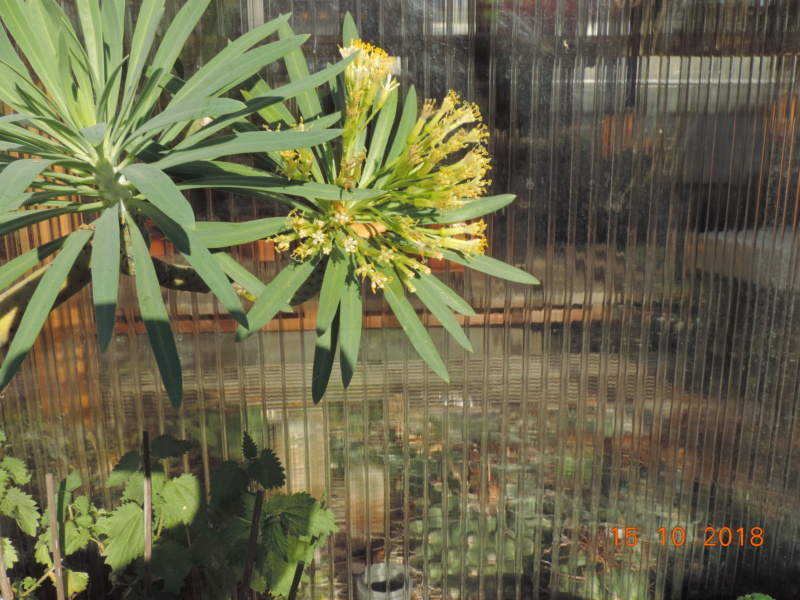 Cacti and Sukkulent in Köln, every day new flowers in the greenhouse Part 201 Bild1426