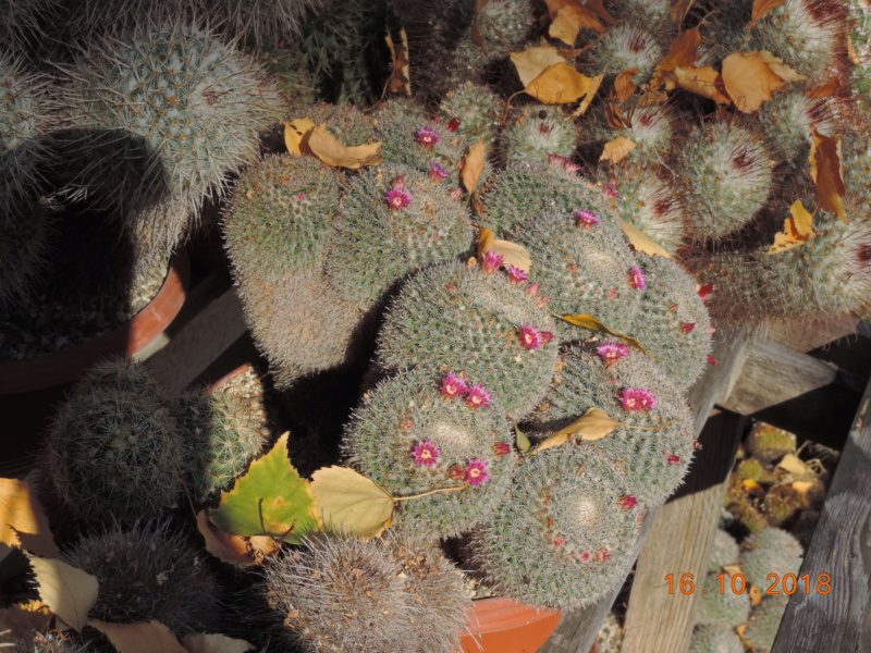 Cacti and Sukkulent in Köln, every day new flowers in the greenhouse Part 201 Bild1449