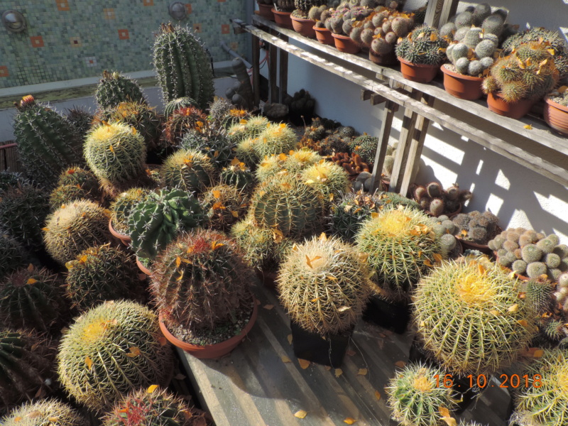 Cacti and Sukkulent in Köln, every day new flowers in the greenhouse Part 201 Bild1450