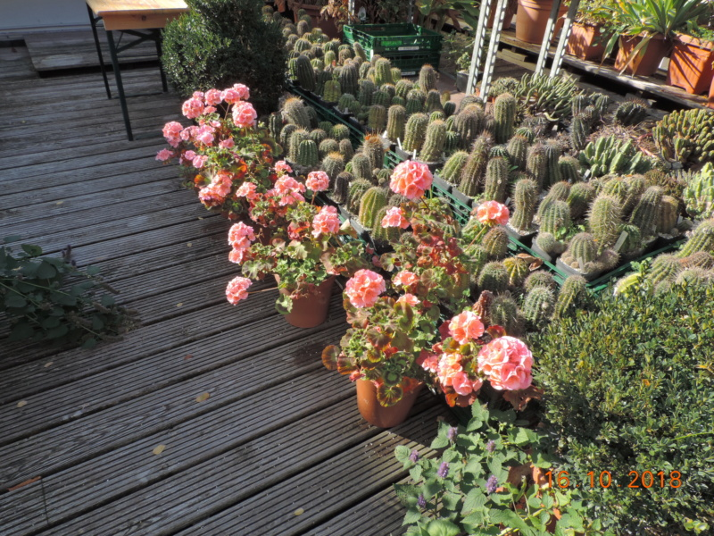 Cacti and Sukkulent in Köln, every day new flowers in the greenhouse Part 201 Bild1457