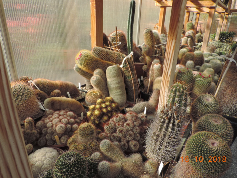Cacti and Sukkulent in Köln, every day new flowers in the greenhouse Part 201 Bild1460