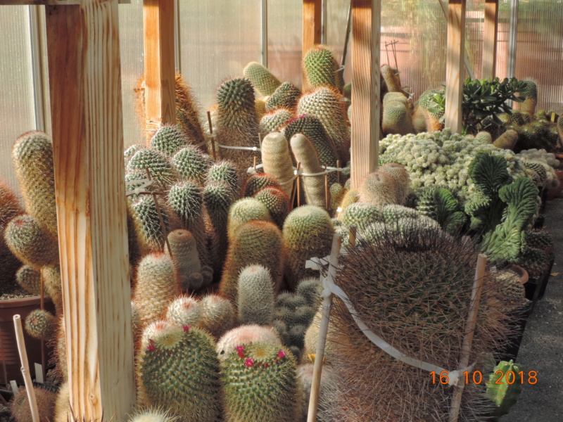 Cacti and Sukkulent in Köln, every day new flowers in the greenhouse Part 201 Bild1463