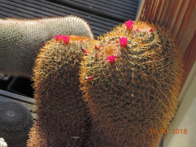 Cacti and Sukkulent in Köln, every day new flowers in the greenhouse Part 201 Bild1478