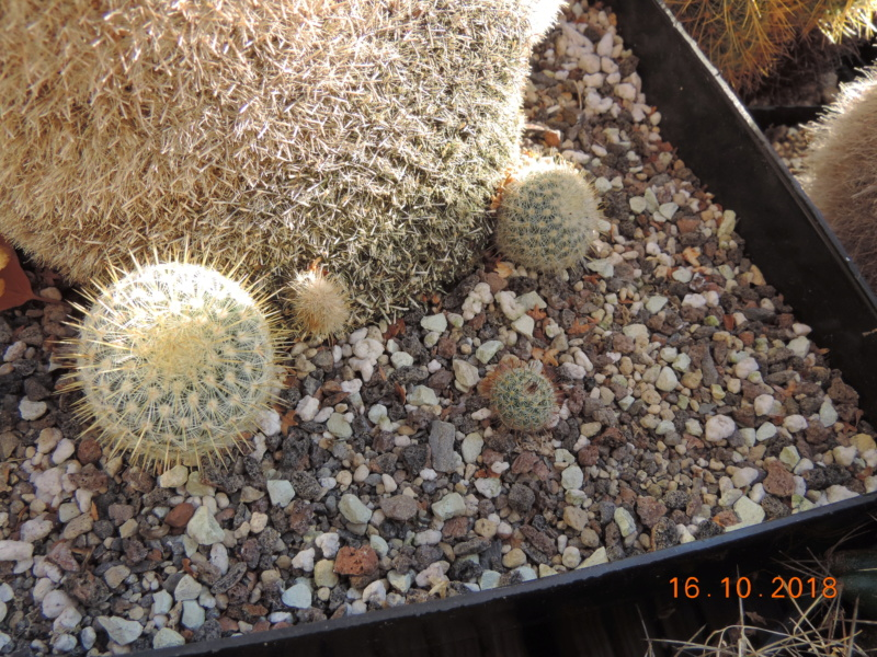 Cacti and Sukkulent in Köln, every day new flowers in the greenhouse Part 201 Bild1480