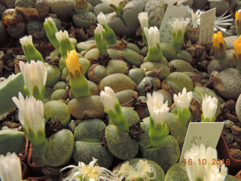 Cacti and Sukkulent in Köln, every day new flowers in the greenhouse Part 202 Bild1563