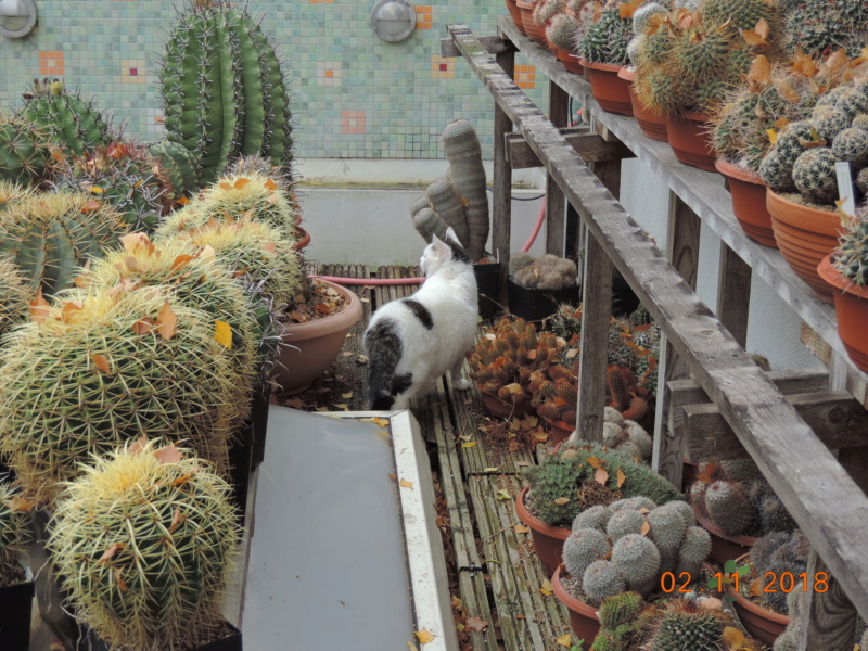 Cacti and Sukkulent in Köln, every day new flowers in the greenhouse Part 202 Bild1598