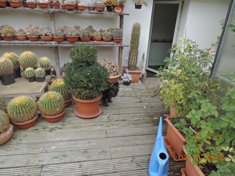 Cacti and Sukkulent in Köln, every day new flowers in the greenhouse Part 202 Bild1607