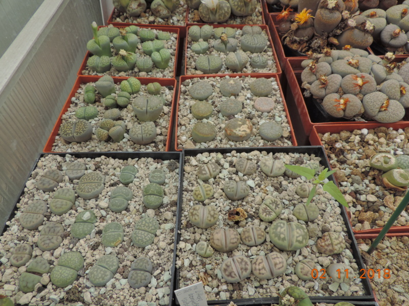 Cacti and Sukkulent in Köln, every day new flowers in the greenhouse Part 202 Bild1633