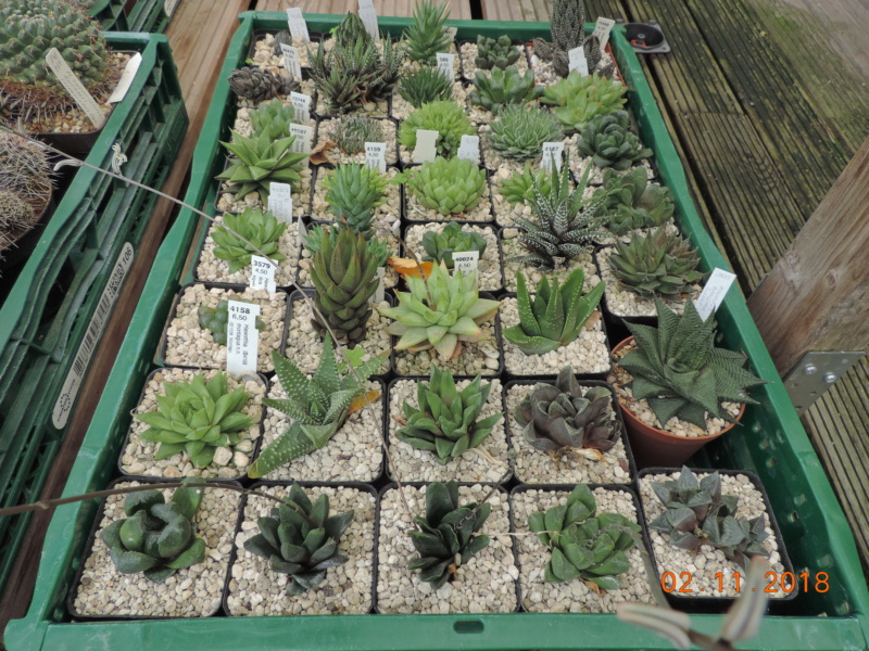 Cacti and Sukkulent in Köln, every day new flowers in the greenhouse Part 202 Bild1644