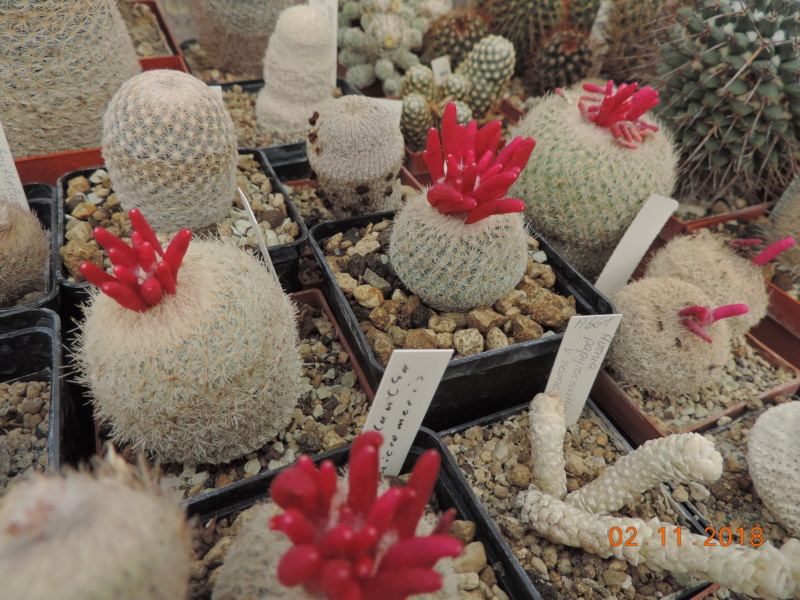 Cacti and Sukkulent in Köln, every day new flowers in the greenhouse Part 202 Bild1647