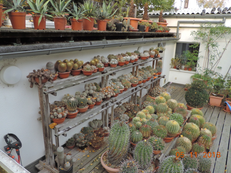 Cacti and Sukkulent in Köln, every day new flowers in the greenhouse Part 202 Bild1652