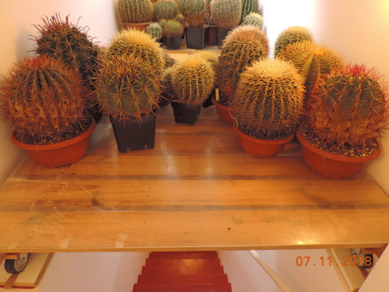 Cacti and Sukkulent in Köln, every day new flowers in the greenhouse Part 203 Bild1661