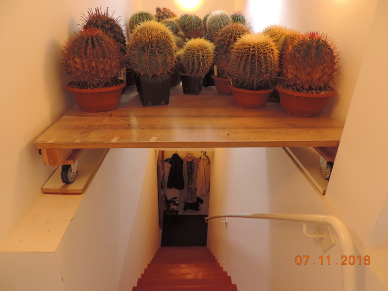Cacti and Sukkulent in Köln, every day new flowers in the greenhouse Part 203 Bild1662