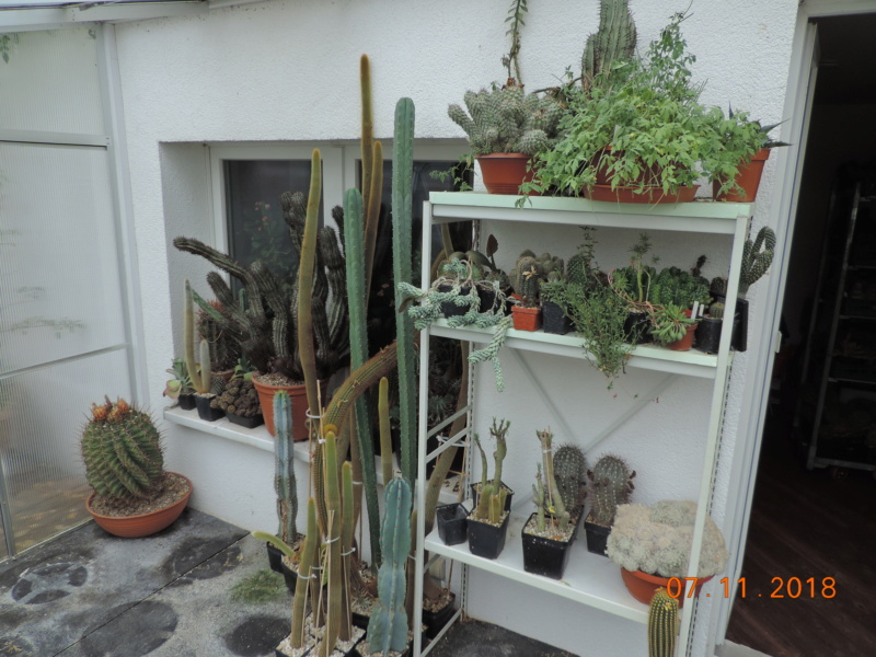 Cacti and Sukkulent in Köln, every day new flowers in the greenhouse Part 203 Bild1663