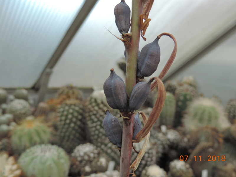 Cacti and Sukkulent in Köln, every day new flowers in the greenhouse Part 203 Bild1672