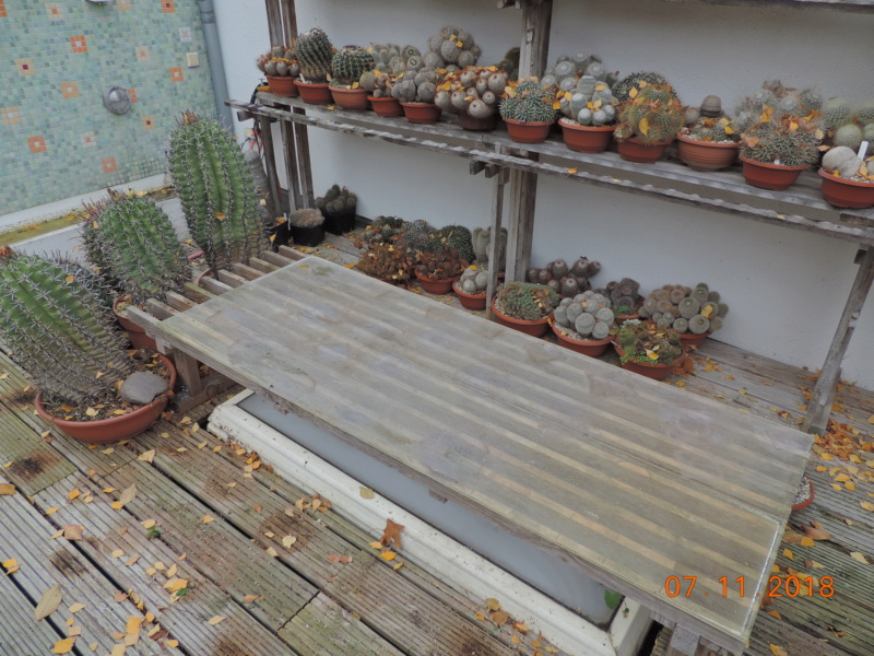 Cacti and Sukkulent in Köln, every day new flowers in the greenhouse Part 203 Bild1676