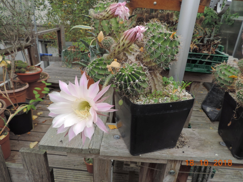 Cacti and Sukkulent in Köln, every day new flowers in the greenhouse Part 203 Bild1720