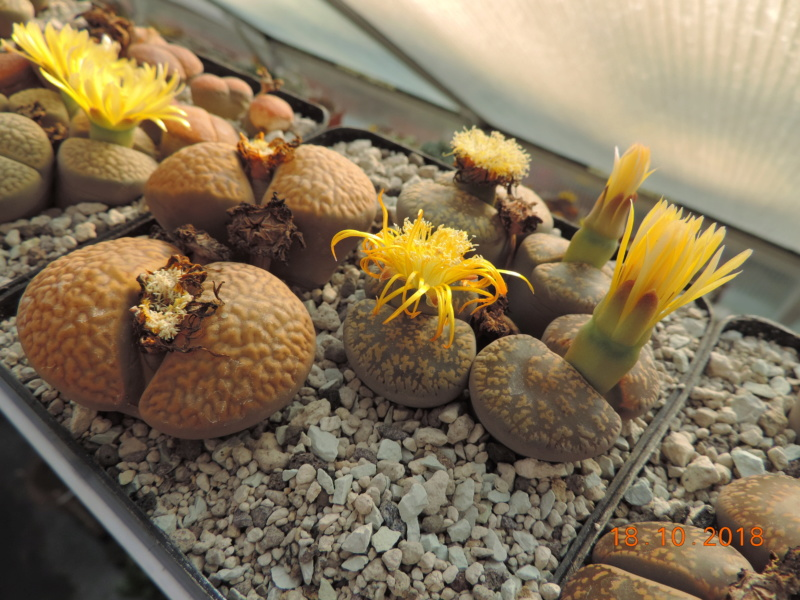 Cacti and Sukkulent in Köln, every day new flowers in the greenhouse Part 203 Bild1726