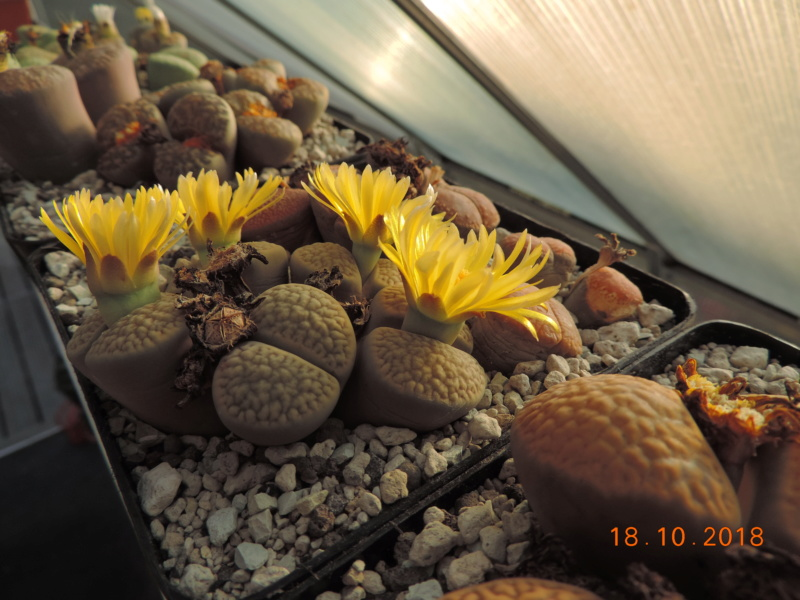 Cacti and Sukkulent in Köln, every day new flowers in the greenhouse Part 203 Bild1727