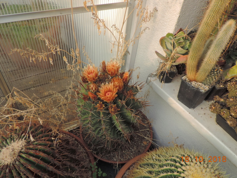 Cacti and Sukkulent in Köln, every day new flowers in the greenhouse Part 203 Bild1732