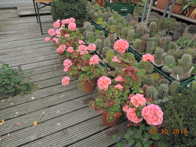 Cacti and Sukkulent in Köln, every day new flowers in the greenhouse Part 203 Bild1737