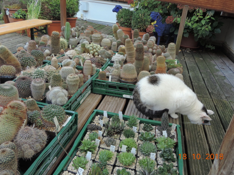 Cacti and Sukkulent in Köln, every day new flowers in the greenhouse Part 203 Bild1740