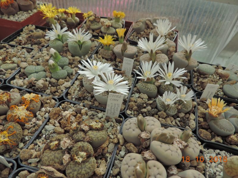 Cacti and Sukkulent in Köln, every day new flowers in the greenhouse Part 203 Bild1756