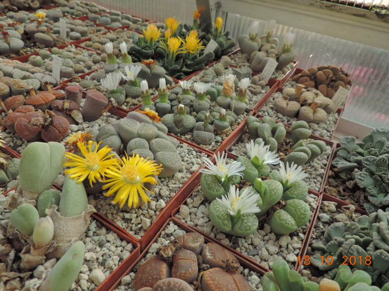 Cacti and Sukkulent in Köln, every day new flowers in the greenhouse Part 203 Bild1758