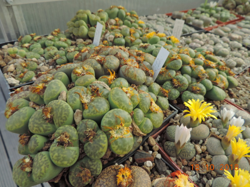 Cacti and Sukkulent in Köln, every day new flowers in the greenhouse Part 203 Bild1765