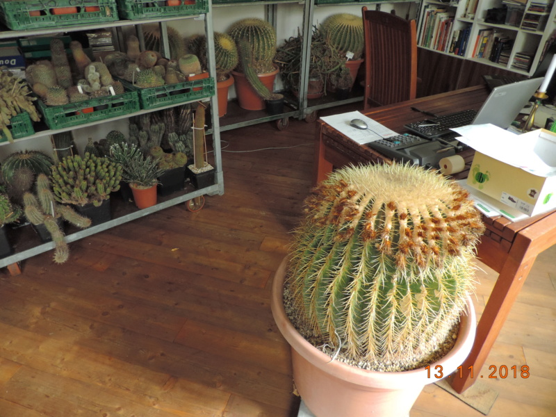 Cacti and Sukkulent in Köln, every day new flowers in the greenhouse Part 204 Bild1785