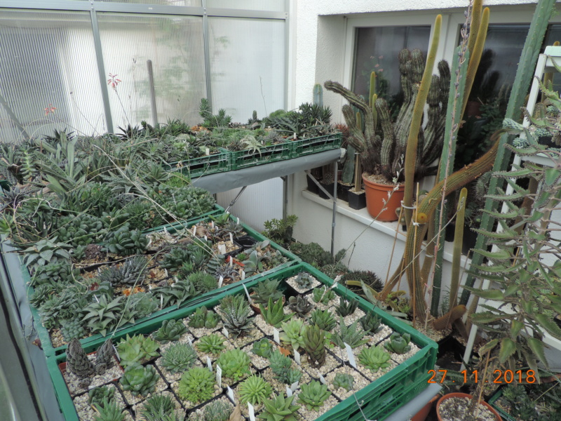 Cacti and Sukkulent in Köln, every day new flowers in the greenhouse Part 204 Bild1789