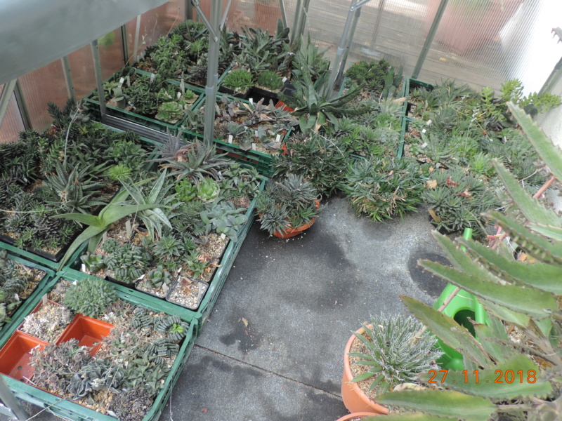 Cacti and Sukkulent in Köln, every day new flowers in the greenhouse Part 204 Bild1791