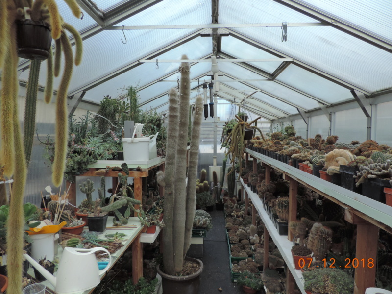 Cacti and Sukkulent in Köln, every day new flowers in the greenhouse Part 204 Bild1792