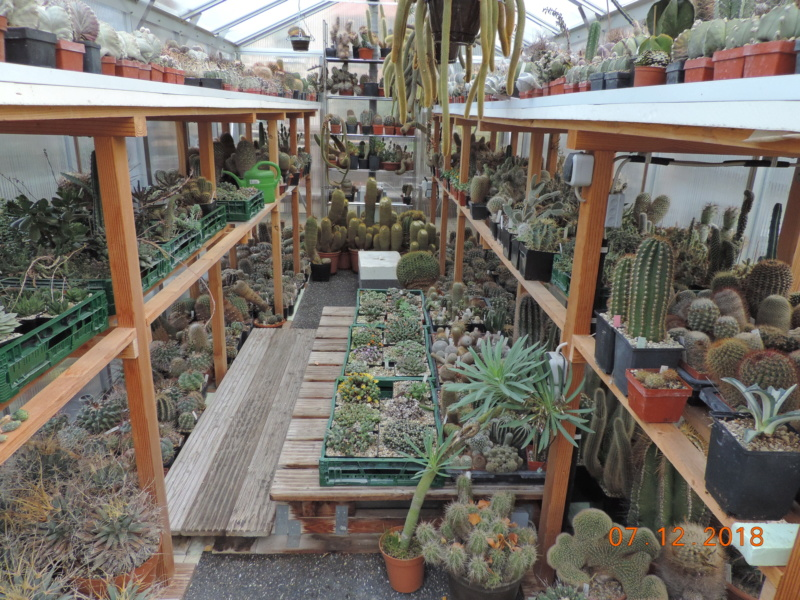 Cacti and Sukkulent in Köln, every day new flowers in the greenhouse Part 204 Bild1793