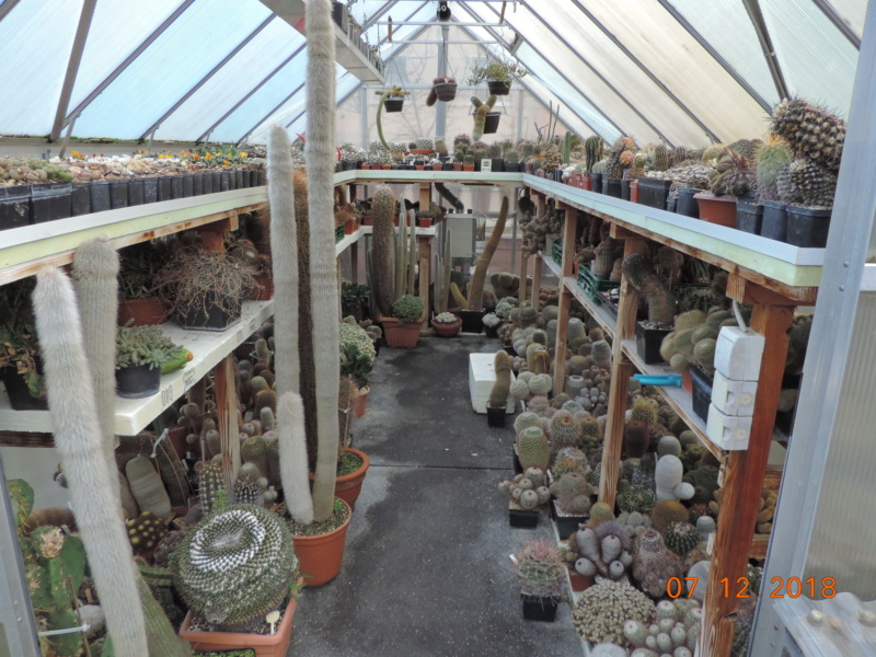 Cacti and Sukkulent in Köln, every day new flowers in the greenhouse Part 204 Bild1795