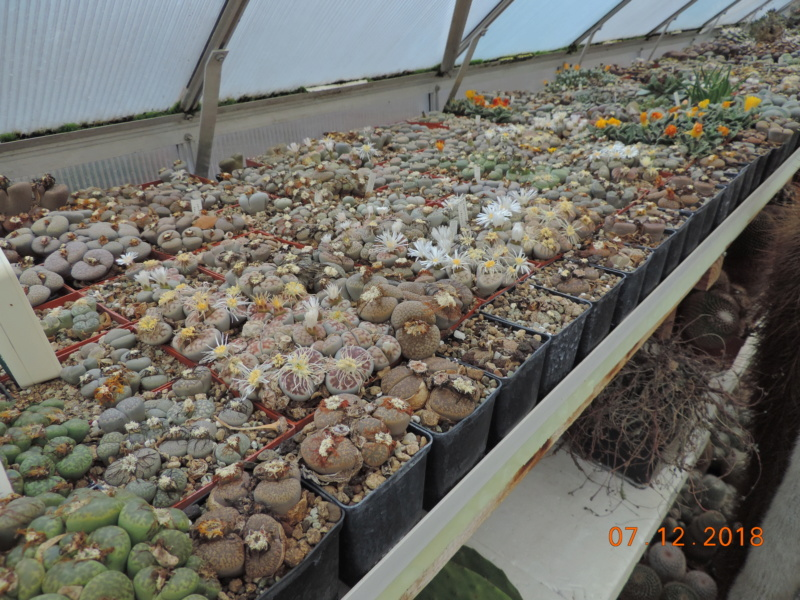 Cacti and Sukkulent in Köln, every day new flowers in the greenhouse Part 204 Bild1796