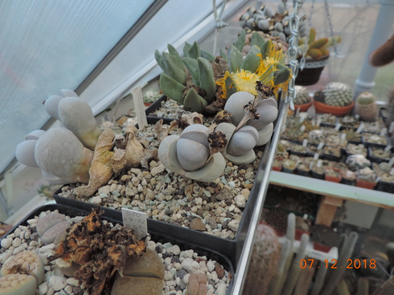 Cacti and Sukkulent in Köln, every day new flowers in the greenhouse Part 204 Bild1797