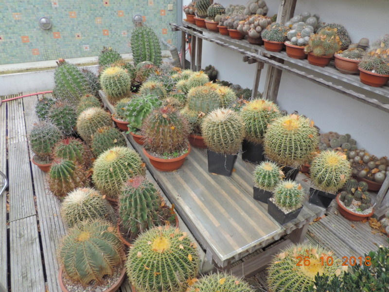 Cacti and Sukkulent in Köln, every day new flowers in the greenhouse Part 205 Bild1815