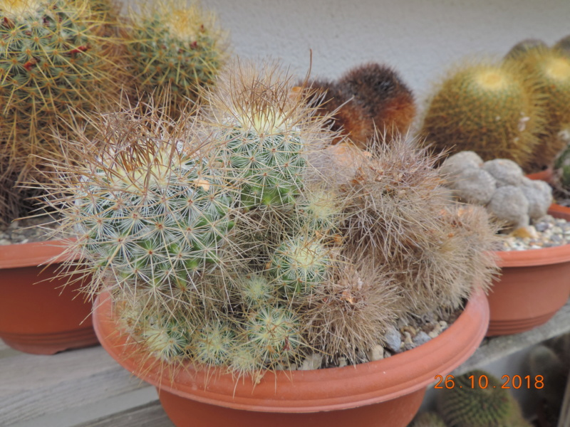 Cacti and Sukkulent in Köln, every day new flowers in the greenhouse Part 205 Bild1826