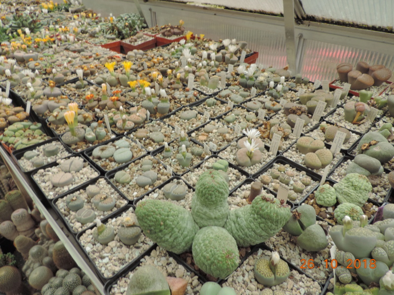Cacti and Sukkulent in Köln, every day new flowers in the greenhouse Part 205 Bild1832