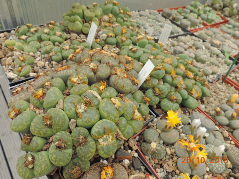 Cacti and Sukkulent in Köln, every day new flowers in the greenhouse Part 205 Bild1846