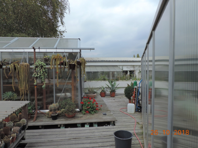 Cacti and Sukkulent in Köln, every day new flowers in the greenhouse Part 205 Bild1860
