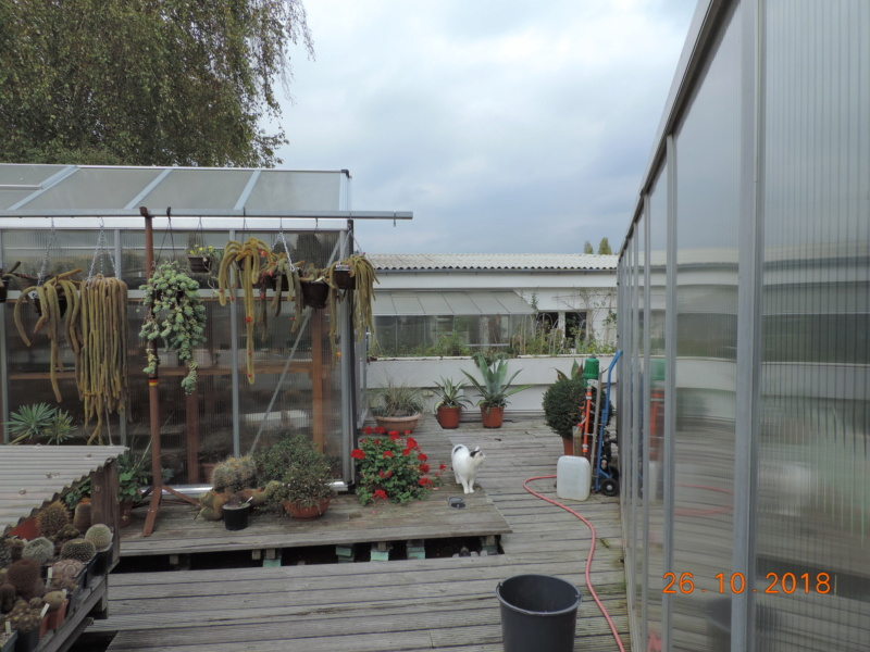 Cacti and Sukkulent in Köln, every day new flowers in the greenhouse Part 205 Bild1861