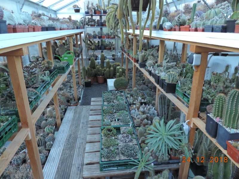 Cacti and Sukkulent in Köln, every day new flowers in the greenhouse Part 205 Bild1909