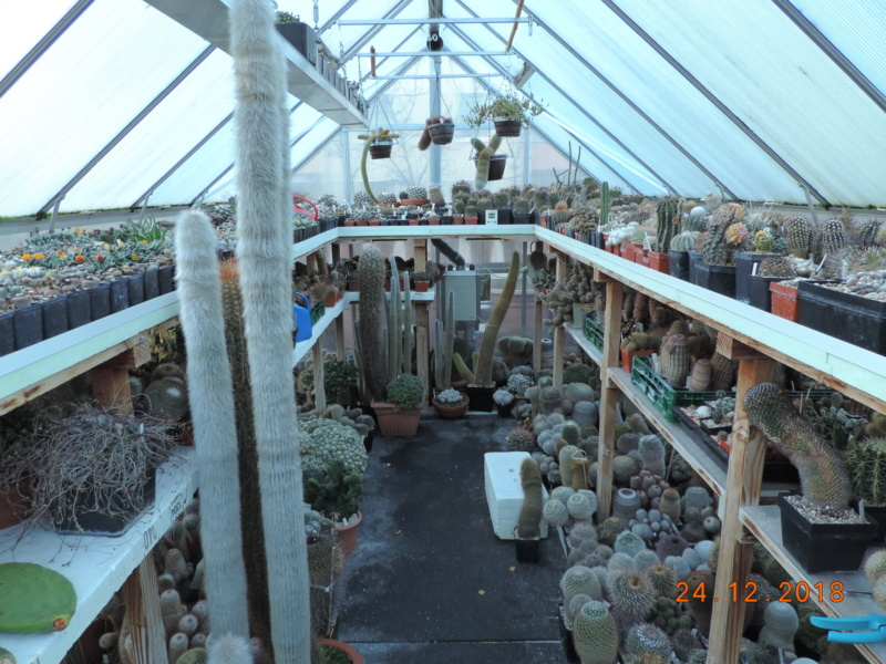 Cacti and Sukkulent in Köln, every day new flowers in the greenhouse Part 205 Bild1914